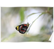 Magical Morpeth Butterfly Poster