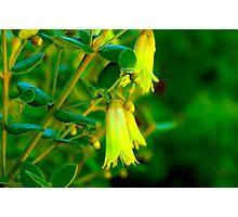Garden Bells Photographic Print
