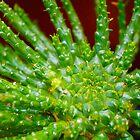 cactusing by Matt Hill
