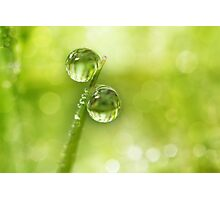 Dew Drop Green Photographic Print