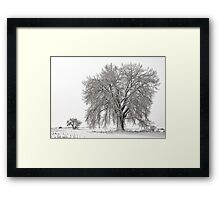 Frosted Cottonwoods Framed Print