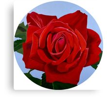 Excelsior - a velvety red rose Canvas Print