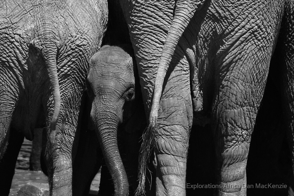 Against the odds by Explorations Africa Dan MacKenzie
