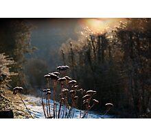 Winter garden Photographic Print