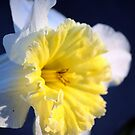 Easter Lily Beauty by Lori D Myers
