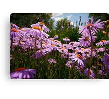 do you see the bumble bee? Canvas Print