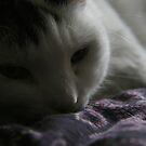 sleepy mig by hmmmbates