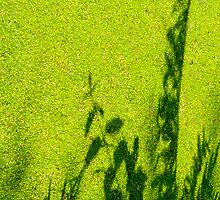 Green Shadow iPhone by physiognomic