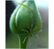 Spider camo! Photographic Print