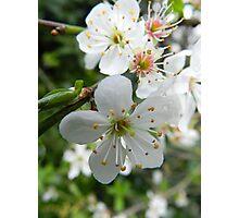 Tree Blossom Photographic Print