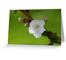 Single Blossom Greeting Card