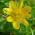 Buttercup  by Johnathan Bellamy