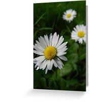 Daisy Trio Greeting Card