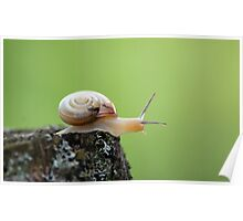 Cute Snail on Edge With Green Background Poster