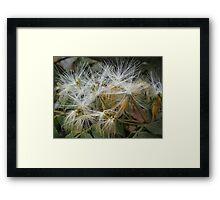 Jungle Blossoms - Flores De LA Selva Framed Print