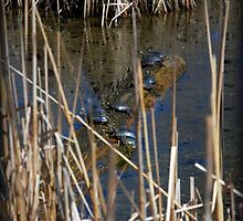 10 Turtles Sunning by jodi payne