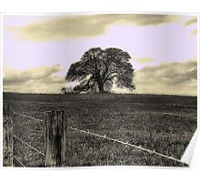Lonesome Oak On The Horizon Poster