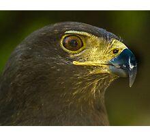 Harris Eagle Photographic Print