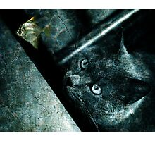 The abyss cat Photographic Print