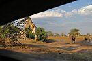 Scram! by Explorations Africa Dan MacKenzie