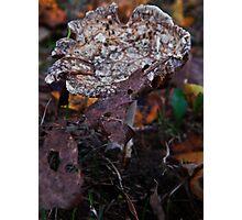 Mushroom Kingdom (3915) Photographic Print
