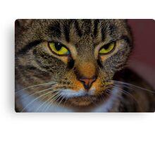 Close up cat Canvas Print