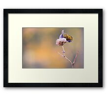 end of season #2  (grape leaf) Framed Print