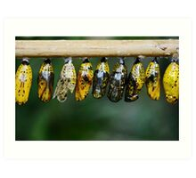 Colorful Butterfly Cocoon Life Art Print