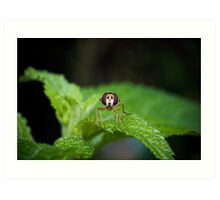 Cute Green Bug-Eyed Insect Art Print