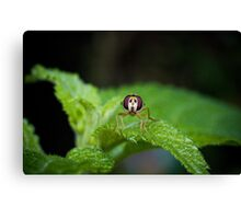 Cute Green Bug-Eyed Insect Canvas Print