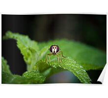 Cute Green Bug-Eyed Insect Poster
