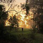 Mist Rising - Sun Setting by Lunaria