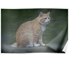 Marvelous Max The Marmalade Cat Poster