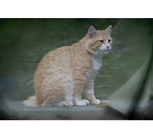 Marvelous Max The Marmalade Cat Photographic Print