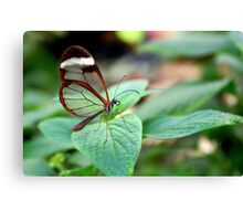Glasswing on Leaf - Greta oto Canvas Print