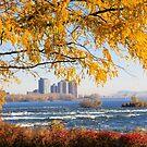 Morning walk, Parc des Rapides, Montreal by Tamara Travers