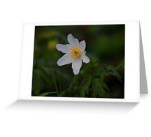 Wild Flowers of Spring, Wood Anemone ( Anemone Nemorosa) Greeting Card