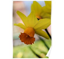 Downward Daffodil  Poster