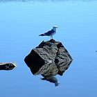 Seagull Reflections by Madsen1981