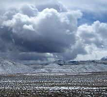Wild Nevada by marilyn diaz