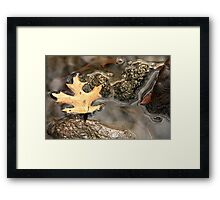Leaf In Water Framed Print