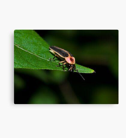 Lighting Bug Canvas Print
