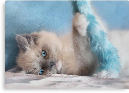 Playtime with Chianti by Lori Deiter