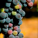 Wine in Time  by Bromoson Photography