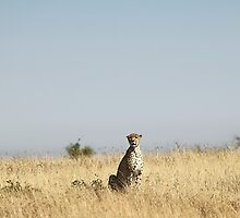 On The Lookout by Carole-Anne
