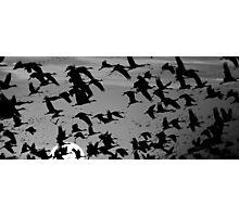 Crane Sunset Photographic Print