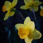 Spring Triplets by Jeanne Sheridan