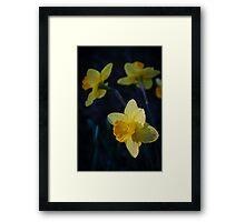 Spring Triplets Framed Print