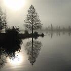 Cypress in the Fog  by May Lattanzio