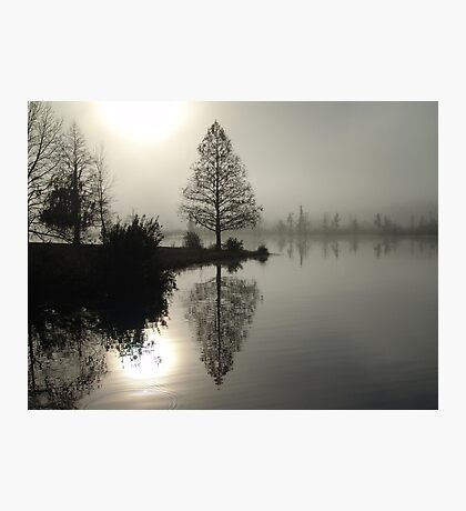 Cypress in the Fog  Photographic Print